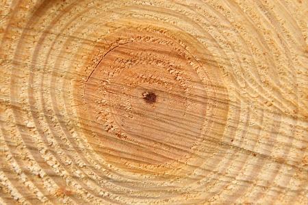 heimisches Holz im Anschnitt