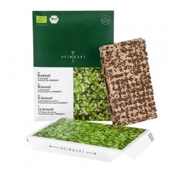 Microgreen Bio Saatpad Brokkoli von Heimgart