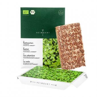 Microgreen Bio Saatpad Radieschen von Heimgart