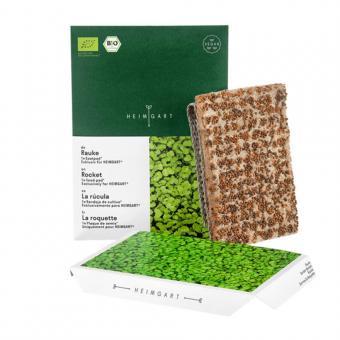 Microgreen Bio Saatpad Rauke von Heimgart