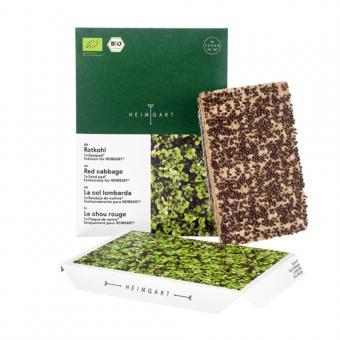 Microgreen Bio Saatpad Rotkohl von Heimgart