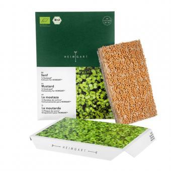 Microgreen Bio Saatpad Senf von Heimgart